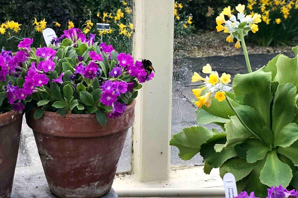 Um exemplo de bumblebee <3